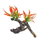 Aquatop Fiery Red Plant on Resin Driftwood