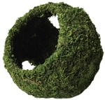 Galapagos Mossy Cave Green w/ Holes 8""