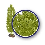 Weco Plant Green Foxtail 9""