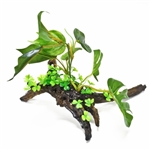 Aquatop Broad Leaf Plant on Resin Driftwood Base