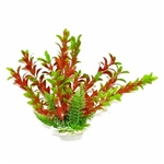 Aquatop Hygrophila Green/Red Plant 9""