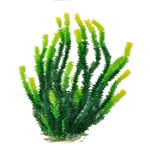 Aquatop Bushy Leaf Grass w/ Yellow Tip Plant 12""