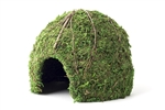 "Galapagos Mossy Dome Green 9""  Diameter"