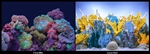 "Seaview Coral Bliss/ Luscia Reef 18"" x 50' Double Sided Background"