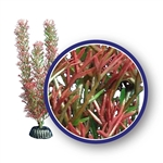 Weco Plant Red Foxtail 9""
