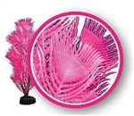 "Weco Pink Princess Feather 12"" Dream Series Wonder Plants"