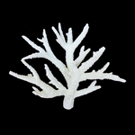 Weco Staghorn Coral WHITE - Medium