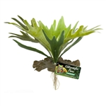 Zoomed Naturalistic Flora Staghorn Fern